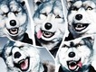 MAN WITH A MISSION、今度はスキー場でのライブを発表!