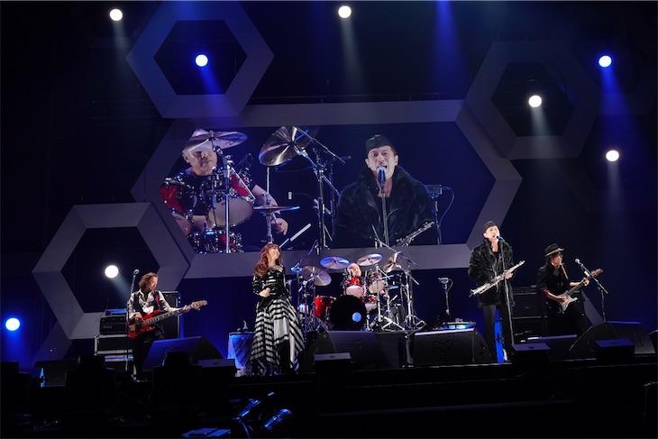 BARBEE BOYS、配信限定アルバム『MasterBee』本日リリース!LIVE DVD&Blu-ray『PlainBee』発売決定!